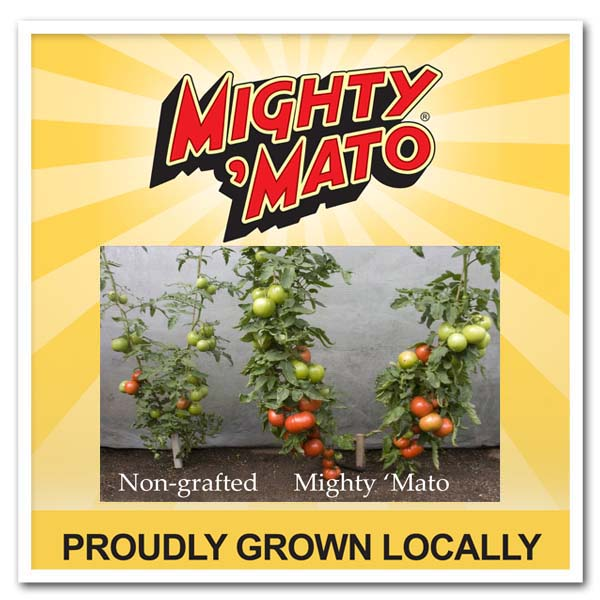 Tomato Mighty 'Mato Early Girl Grafted Tomato