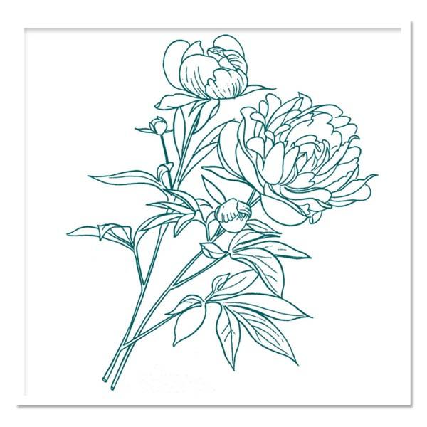 Paeonia Itoh Miska or Beautiful Blossom, Intersectional Peony