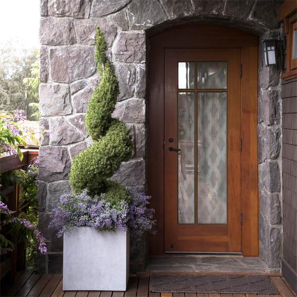 Picea Dwarf Alberta Spruce Spiral Topiary