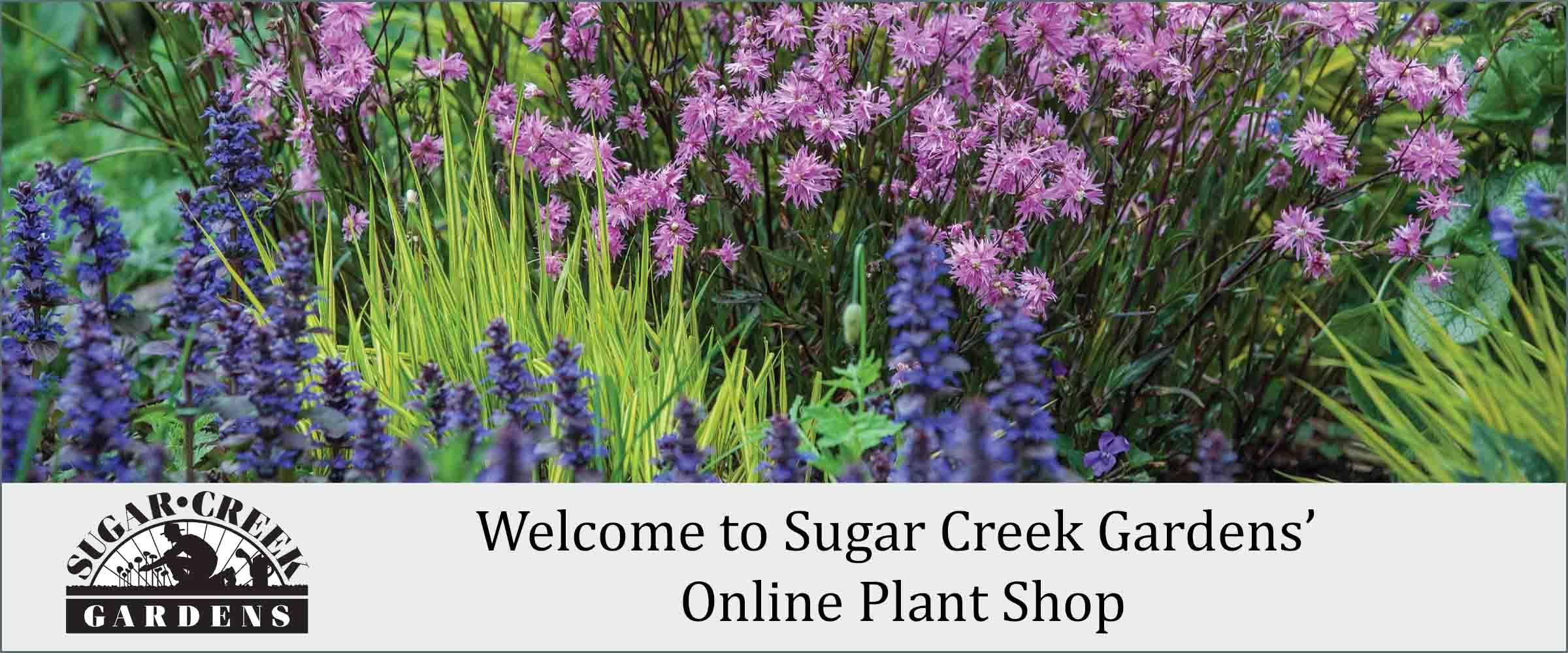 Shop Sugar Creek Gardens Plant Shop
