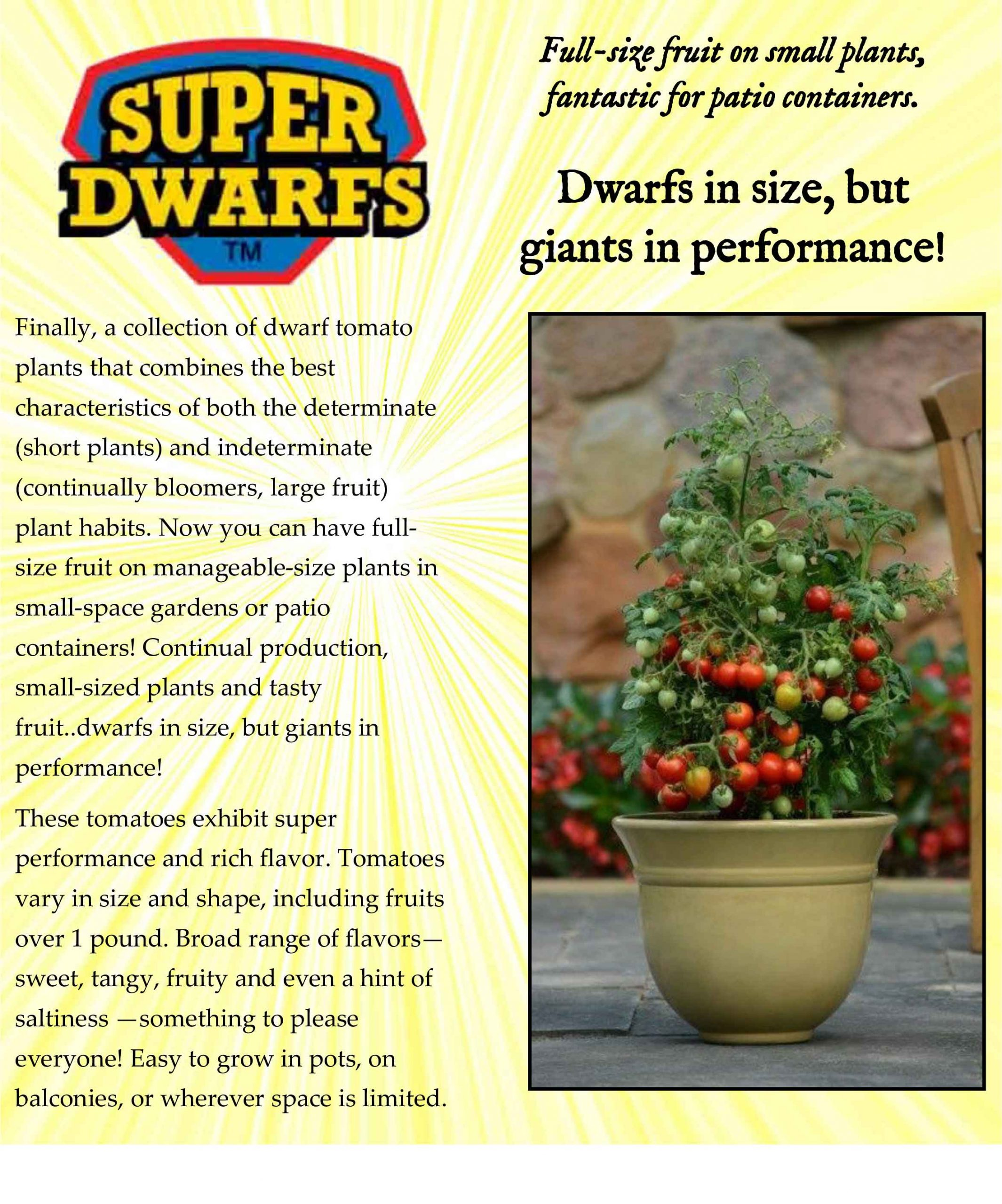 Super-dwarfs-patio-tomatoes