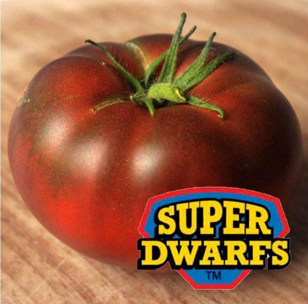 Tomato Rosella Purple Super Dwarf