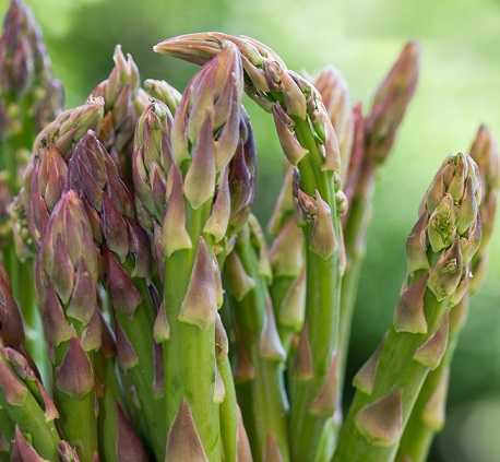 Asparagus - Organic
