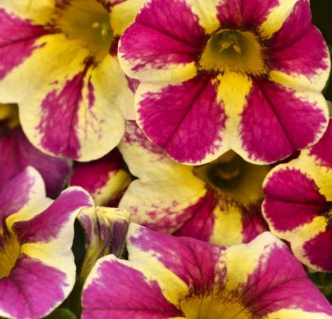Millionbells Candy Bouquet