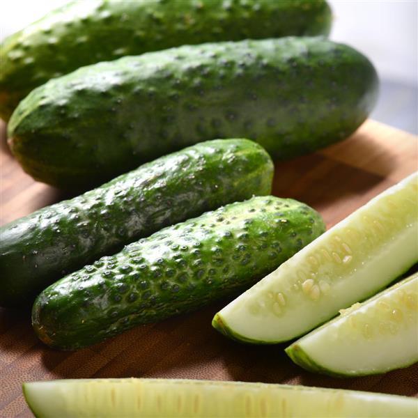 Cucumber Pickling - Organic