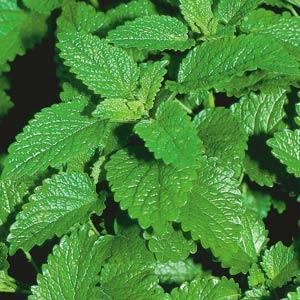 Lemon Balm Herb - Organic
