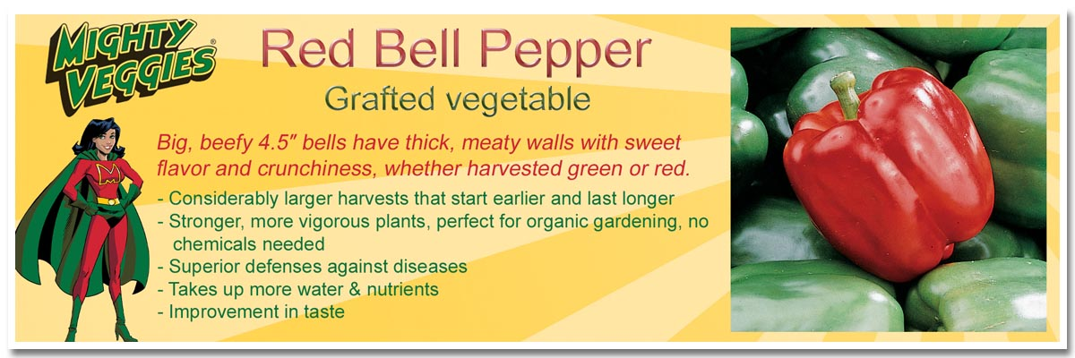 Pepper-red-bell-mighty-veggie