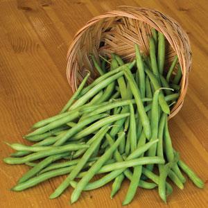 Pole Bean - Organic