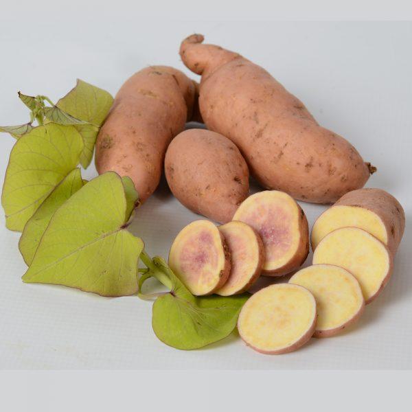 Sweet Potato Yellow Treasure Island Makatea, Ipomoea
