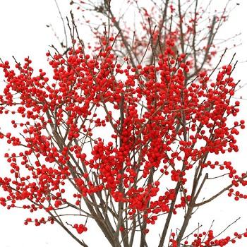 Winterberry Berry Poppins