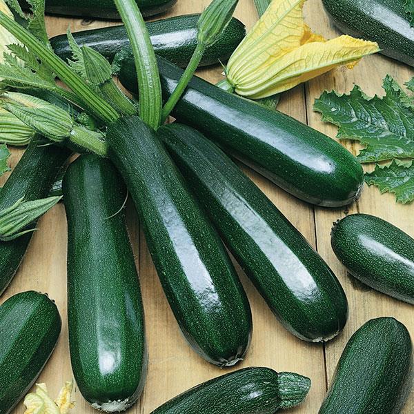 Zucchini Revenue - Organic