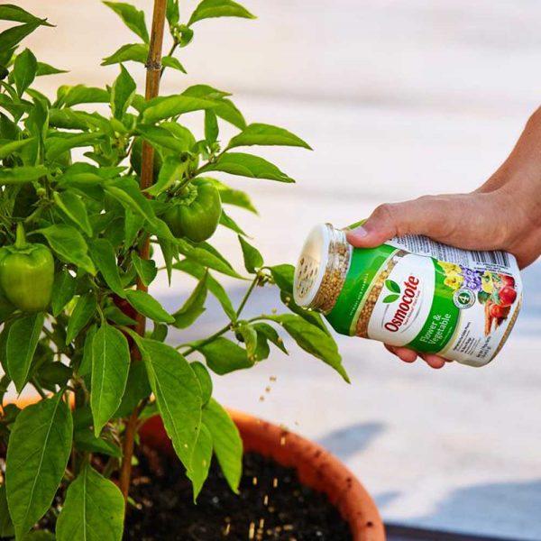Flower and Vegetable Slow Release Fertilizer Lasts 4-Months Osmocote