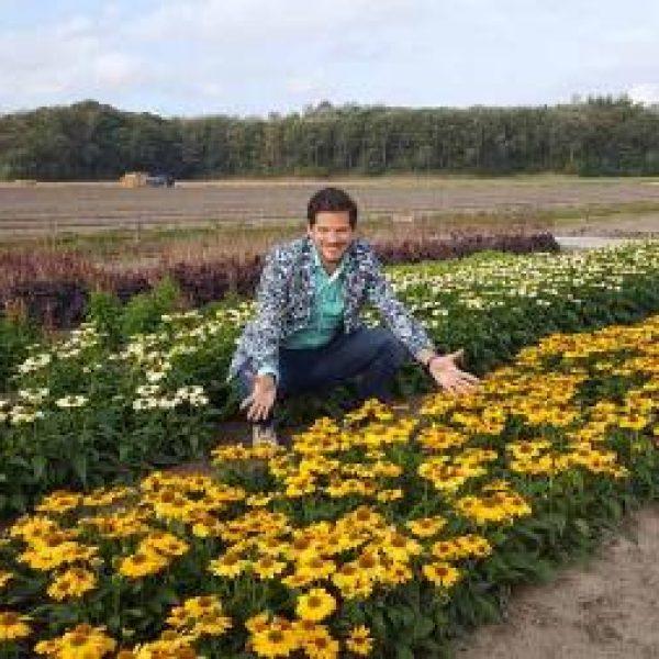 Echinacea Tweety, Coneflower