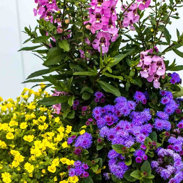 Mixed Annual Container 12″