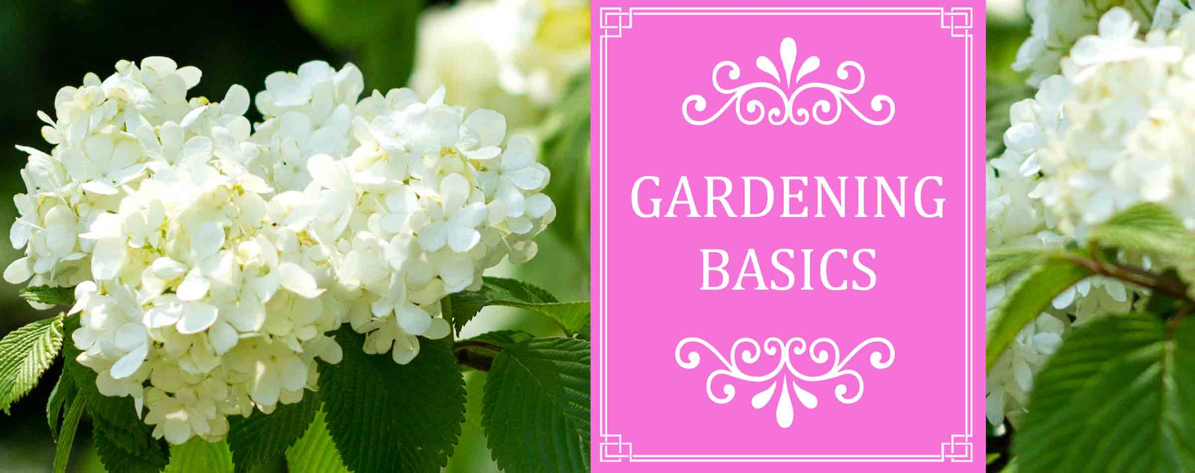 Gardening-Basics tips techniques and gardening information