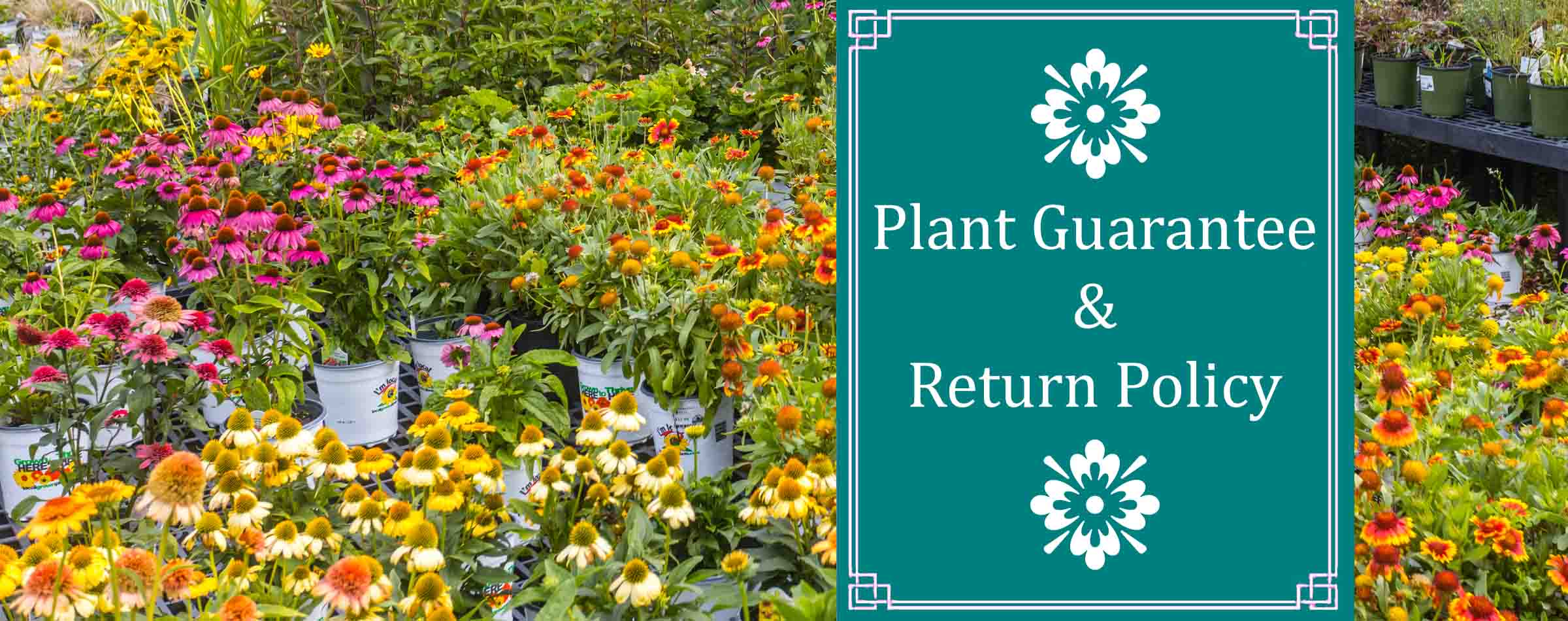 Plant Guarantee and Return Policy