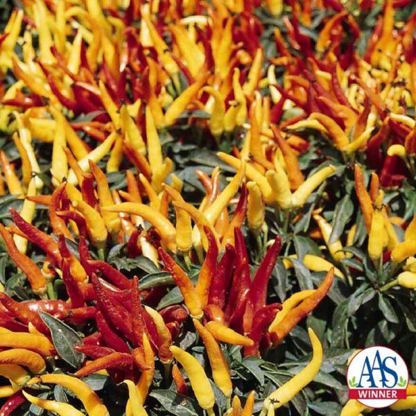 Ornamental Pepper Chilly Chili