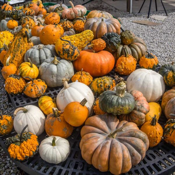 Fall Decorations – Pumpkins – Gourds – Yard  and Home Ornaments