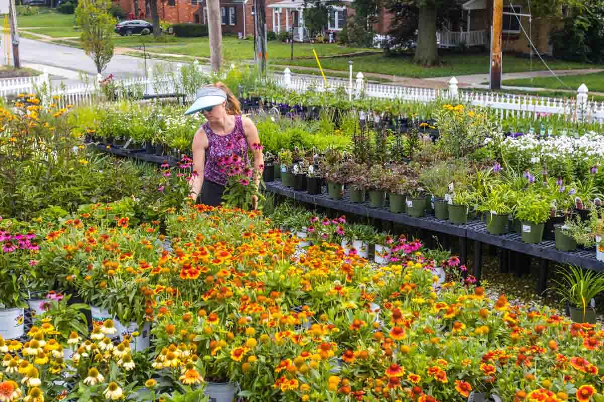Sugar Creek Gardens Perennial Plant Nursery