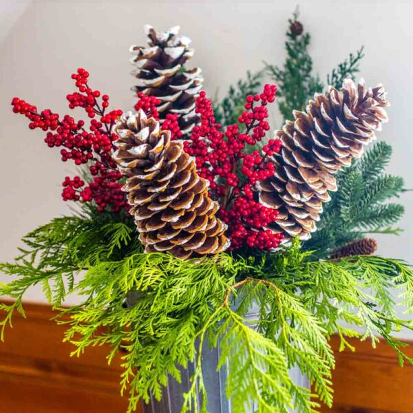Pine Cone – Sugar Pine White Tipped On 24 Inch Stake