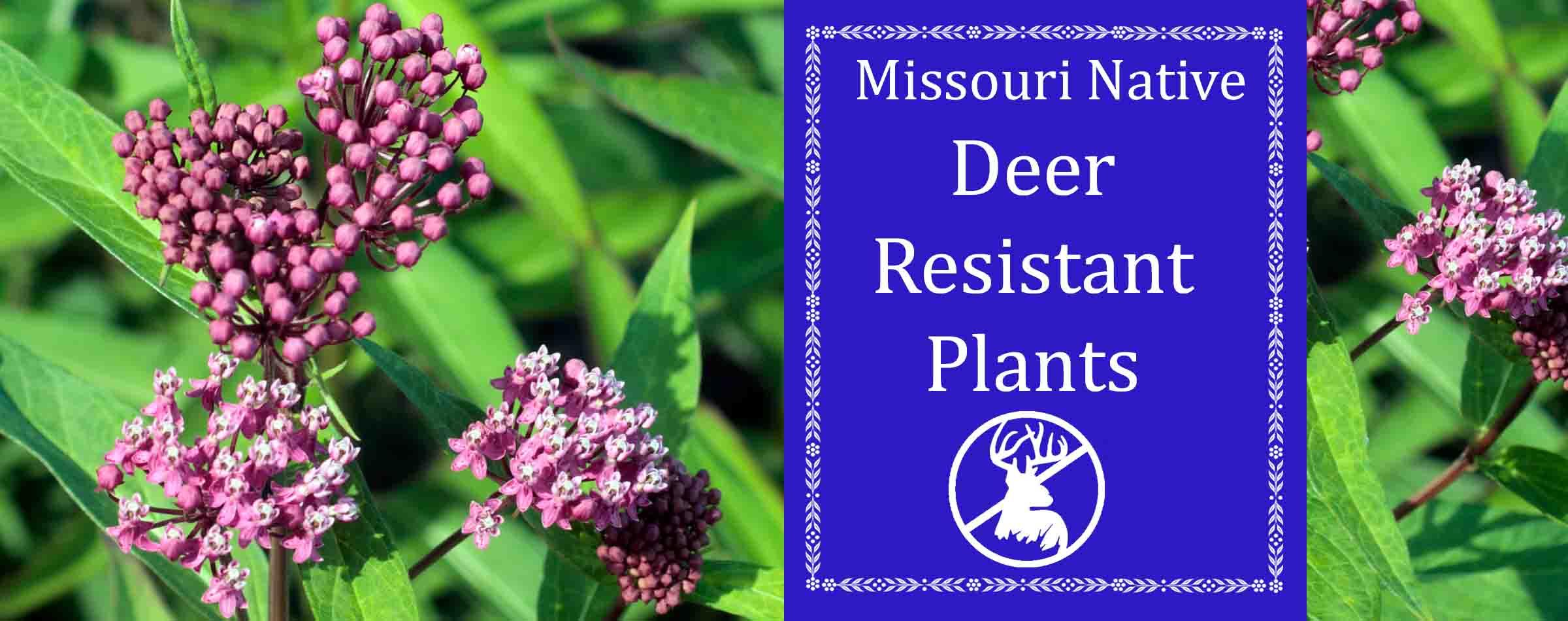 Missouri native deer resistant plants
