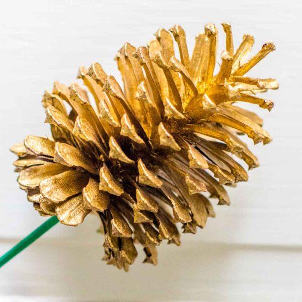 Slash Pine Cone gold St Louis Plant Shop