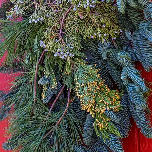 Fresh Cut Evergreen Mini Bunch