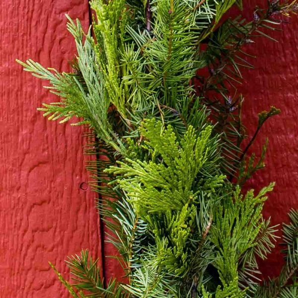Fresh cut Evergreen Mixed Gardland