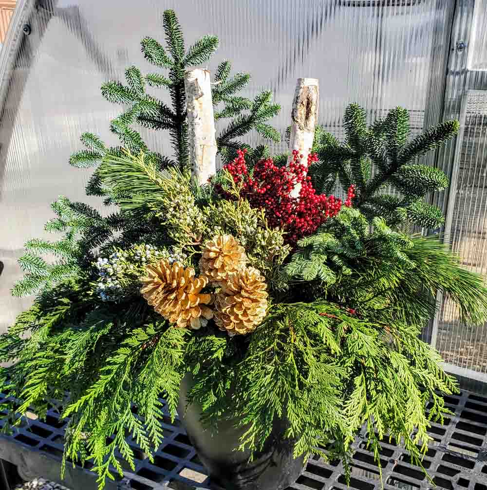 Evergreen Winter Container Christmas St. Louis Garden Center