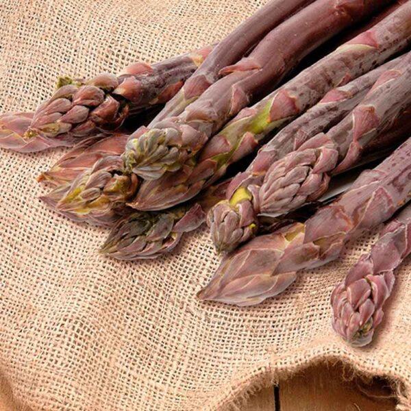 Asparagus Purple Passion