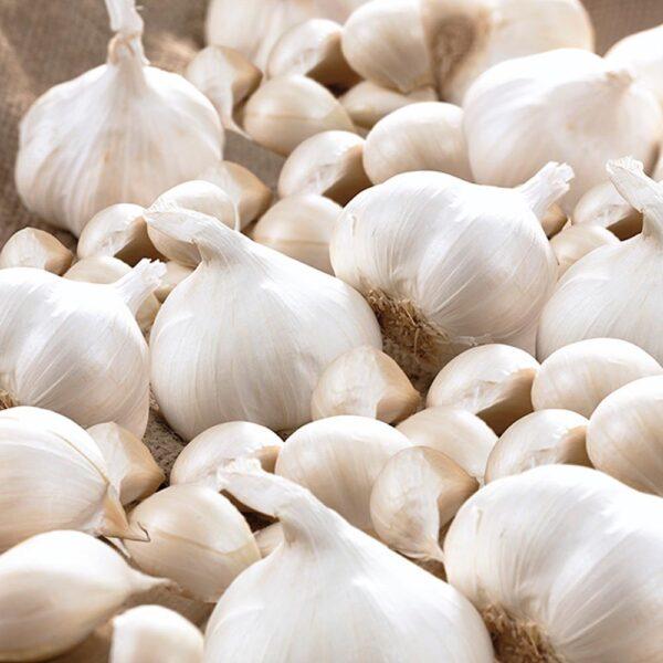 Garlic California