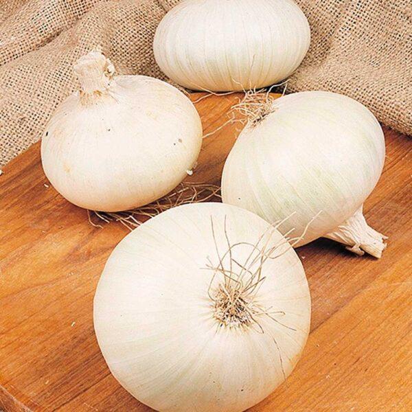 Onion White Snowball