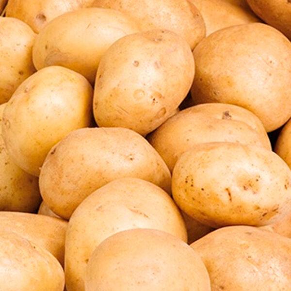 Potato Kennebec