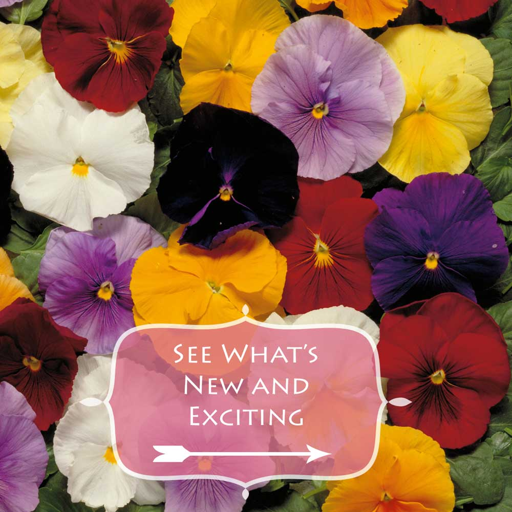 See Whats New and Exciting at the plant nursery